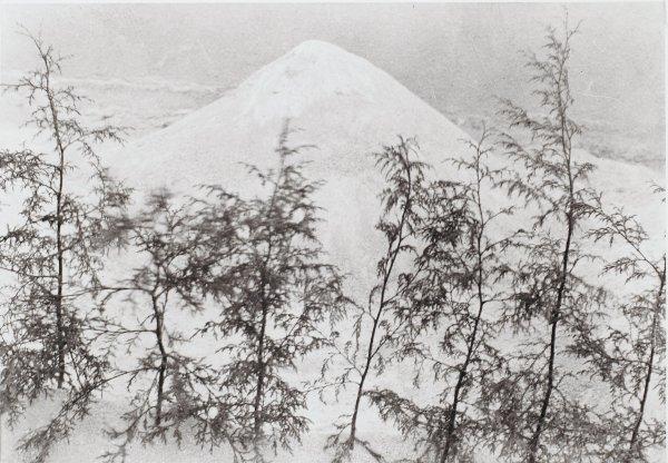 Arena y Pinitos (Sand and Small Pines), Manuel Álvarez Bravo, Portfolio published by Acorn Editions Limited, gelatin silver print