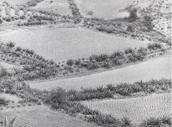 Paisaje de Siembras (Growing Landscape), Manuel Álvarez Bravo, Portfolio published by Acorn Editions Limited, gelatin silver print