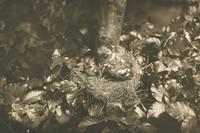 Buckfink Young, Richard Tepe, vintage gelatin print
