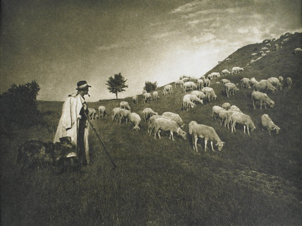 A man wearing a hat and overcoat and carrying a staff stands with his dog at the left of the image. He looks back toward a flock of sheep, which is gathered in a V-shaped formation on a pasture hillside.