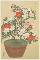 Azaleas, Ohara Koson, Published by Kawaguchi, ink and color on paper