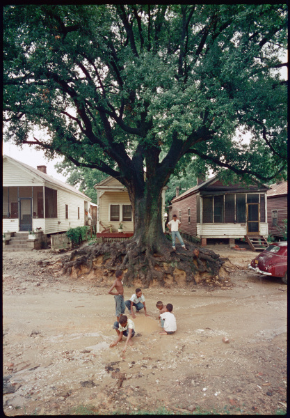 "In the foreground, a group of children are playing in a muddy street. Behind them, at the center of the image, stands a tall tree with exposed roots. The tree stands in front of a row of modest ""shotgun style"" houses."