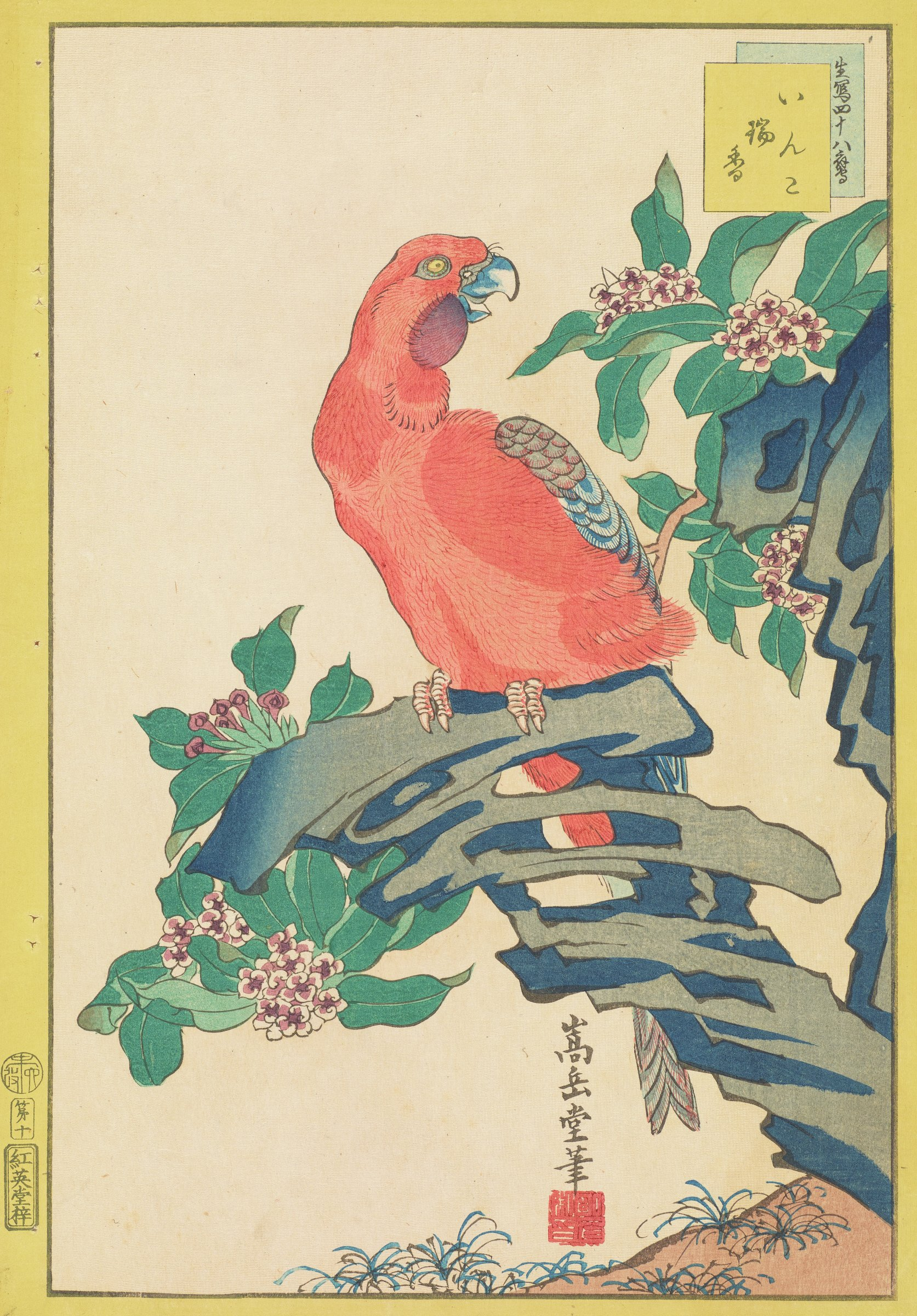 A macaw among sweet Daphne flowers.