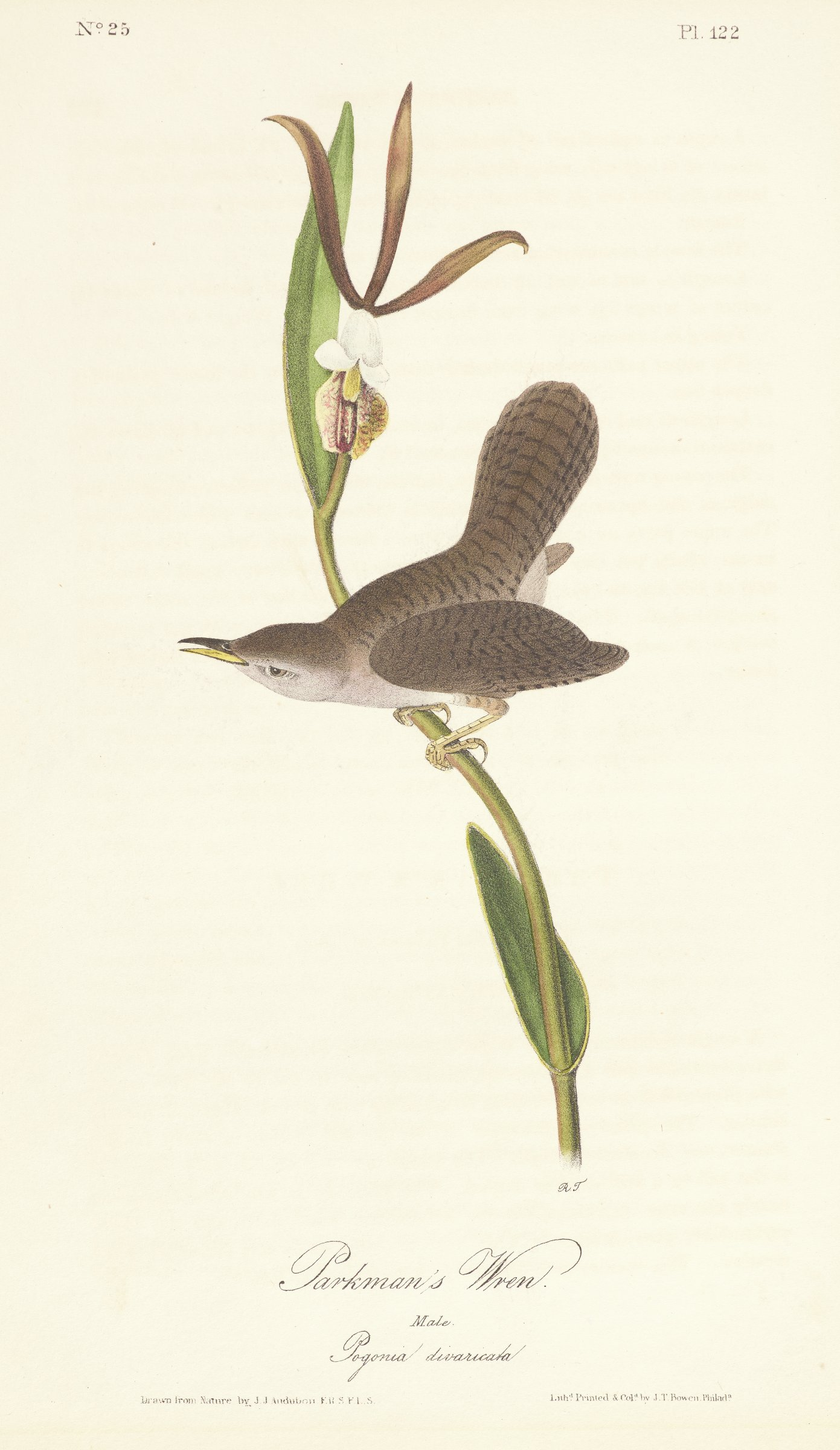 A bird with striped feathering stands on a stem that holds a small dark purple petalled flower.