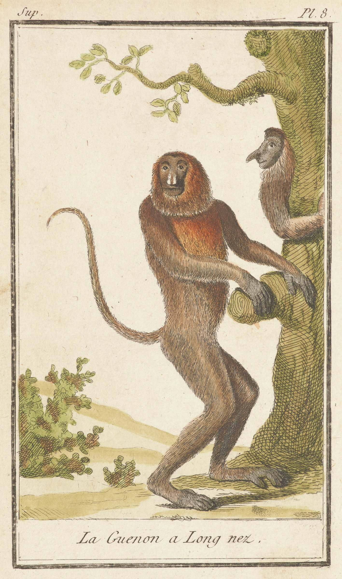 A monkey stands upright near a tree facing the right with head turned to the left. Another monkey is seen in profile holding onto the tree trunk.