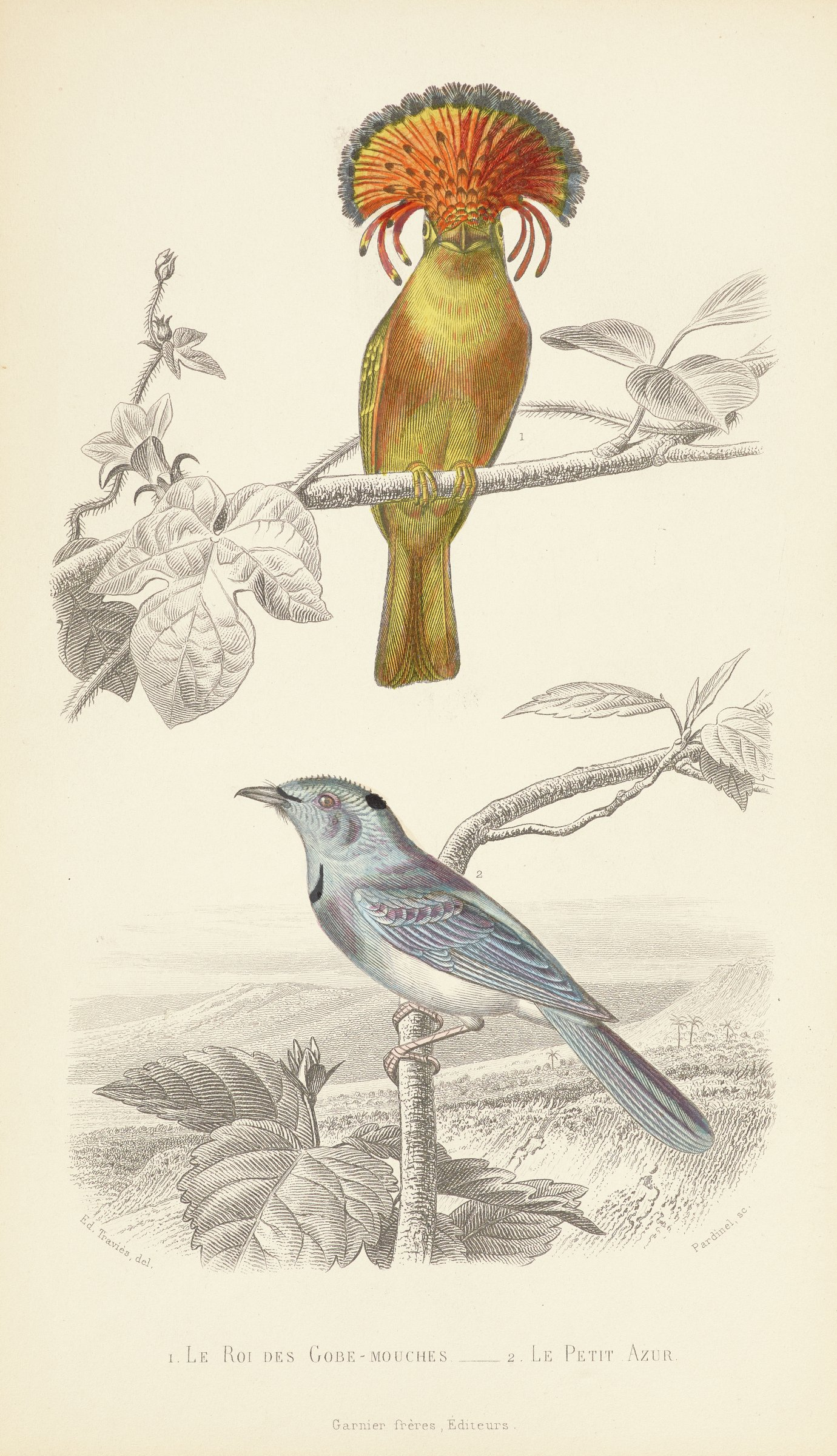 Two hand-colored birds stand uncolored tree branches against uncolored landscape. The upper bird has blue, yellow, and red feathers with a crown shaped feather formation on its head. The lower bird has blue, white, and black feather.