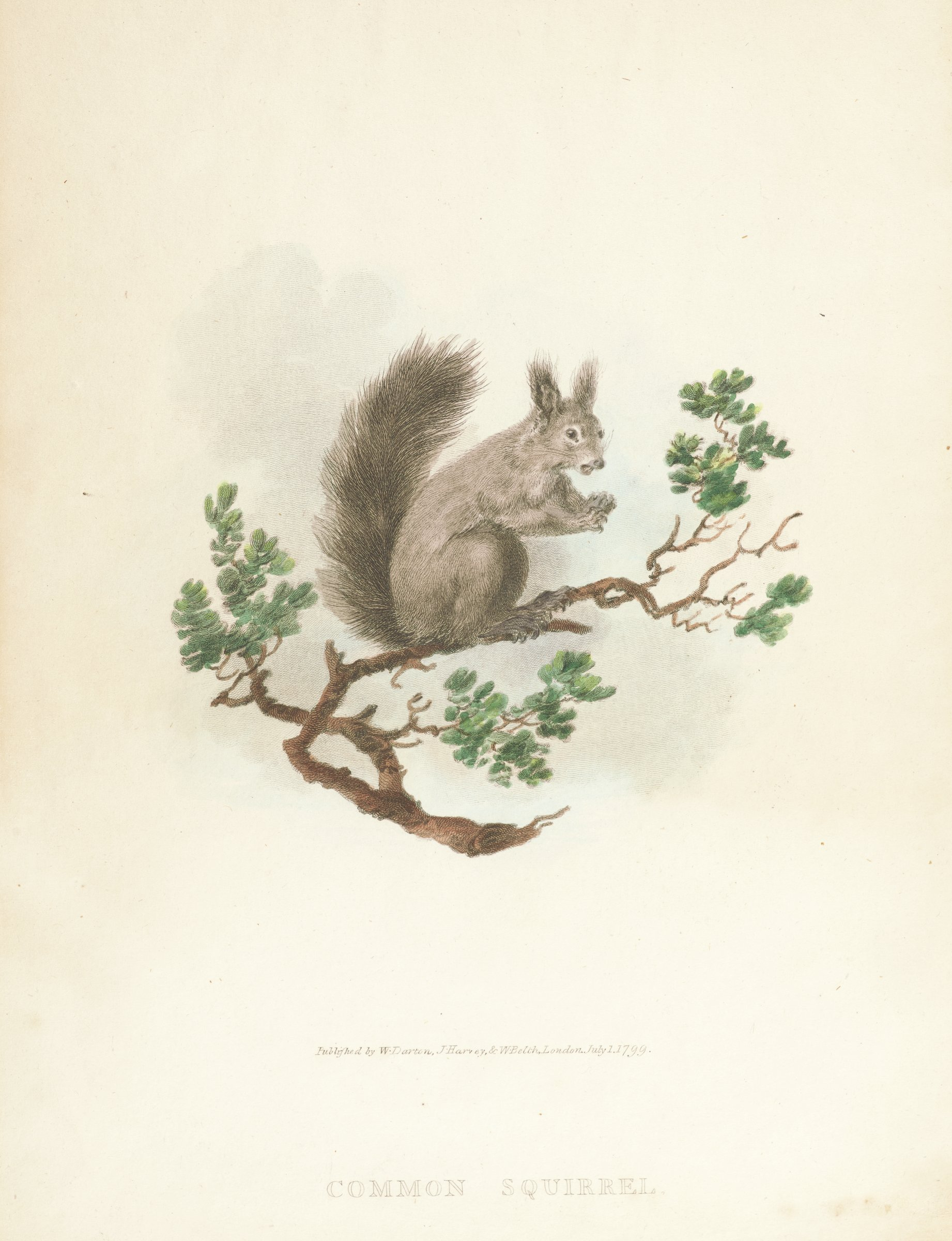 A squirrel sits in profile view on a tree branch looking slightly to the right. Two text pages accompany the print.