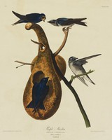 Two black birds on the left stand on a hollowed out gourd that hangs on a tree branch. Two birds on the right, characterized by gray, blue, and white feathers with a spotted chest, stand on the branches of the tree.
