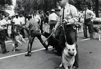 Journalistic photograph of civil rights activists in Birmingham, Alabama being attacked by police dogs during a protest.