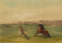 Catching the Wild Horse, George Catlin, lithograph