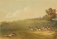 Antelope Shooting, George Catlin, lithograph