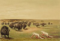 Buffalo Hunt, Under the White Wolf Skin, George Catlin, lithograph