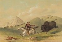 Buffalo Hunt, Chasing Back, George Catlin, lithograph