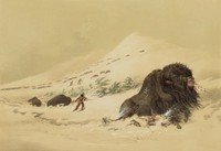 Dying Buffalo, In Snow Drift, George Catlin, lithograph