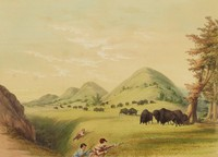Buffalo Hunt, Approaching in a Ravine, George Catlin, lithograph