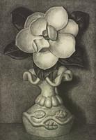 Magnolia, Thomas Still, lithograph