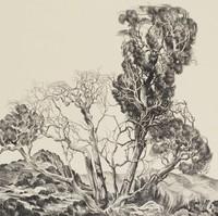 Trees in Arizona, William Elliott, lithograph
