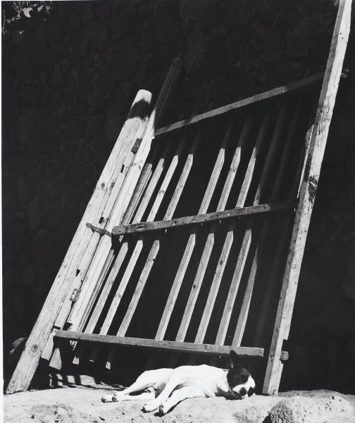 Los Perros durmiendo ladran (Sleeping Dogs Bark), Manuel Álvarez Bravo, Portfolio published by Acorn Editions Limited, gelatin silver print