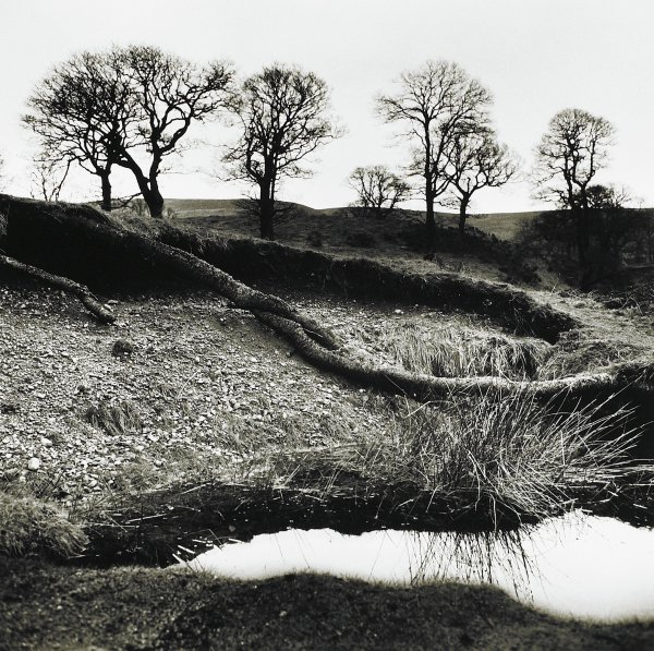 Wicklow Trees, County Wicklow, Ireland, Alen MacWeeney, Published by Hyperion Press Limited, gelatin silver print