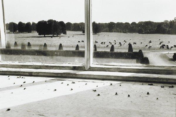 Flies in the Window, Castletown House, Ireland, Alen MacWeeney, Published by Hyperion Press Limited, gelatin silver print