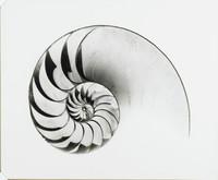 Curves in High Key Nautile Negatif, Ed Willis Barnett, gelatin silver print