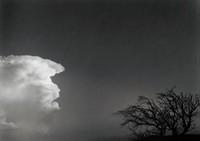 Cloud and Tree, San Sebastian, New Mexico, Paul Caponigro, gelatin silver print
