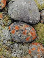 Lichens On River Stones -- South Coast, Eliot Porter, dye-transfer print