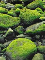 Sea-weed At Low Tide --Hellnar, Snaefellsnes, Eliot Porter, dye-transfer print
