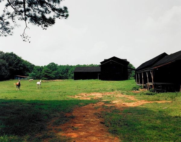 Horses and Black Buildings, Newbern, Alabama, William Christenberry, chromogenic print