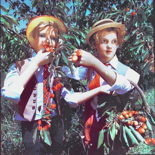 La cueillette (Fruit-Picking), Bernard Faucon, Fresson print