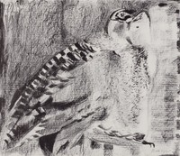 Owl, Janice Biala, crayon lithograph on Arches paper