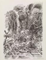 Jungle, Tobias Schneebaum, lithograph