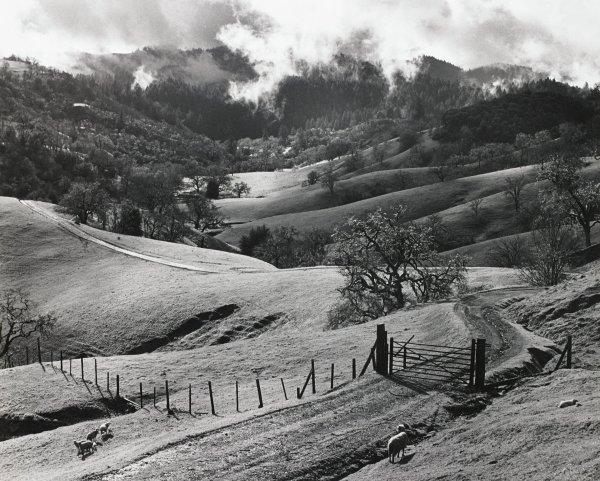 Sonoma County Hills, Ansel Adams, gelatin silver print