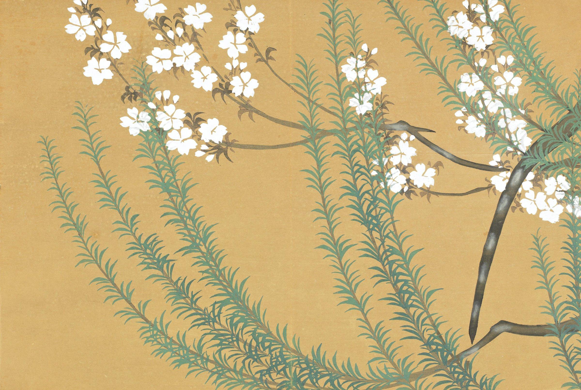 Yanagi, Sakura (Willow Trees and Cherry Blossoms), from Momoyogusa (A World of Things), Volume 2, Kamisaka Sekka, ink and color on paper