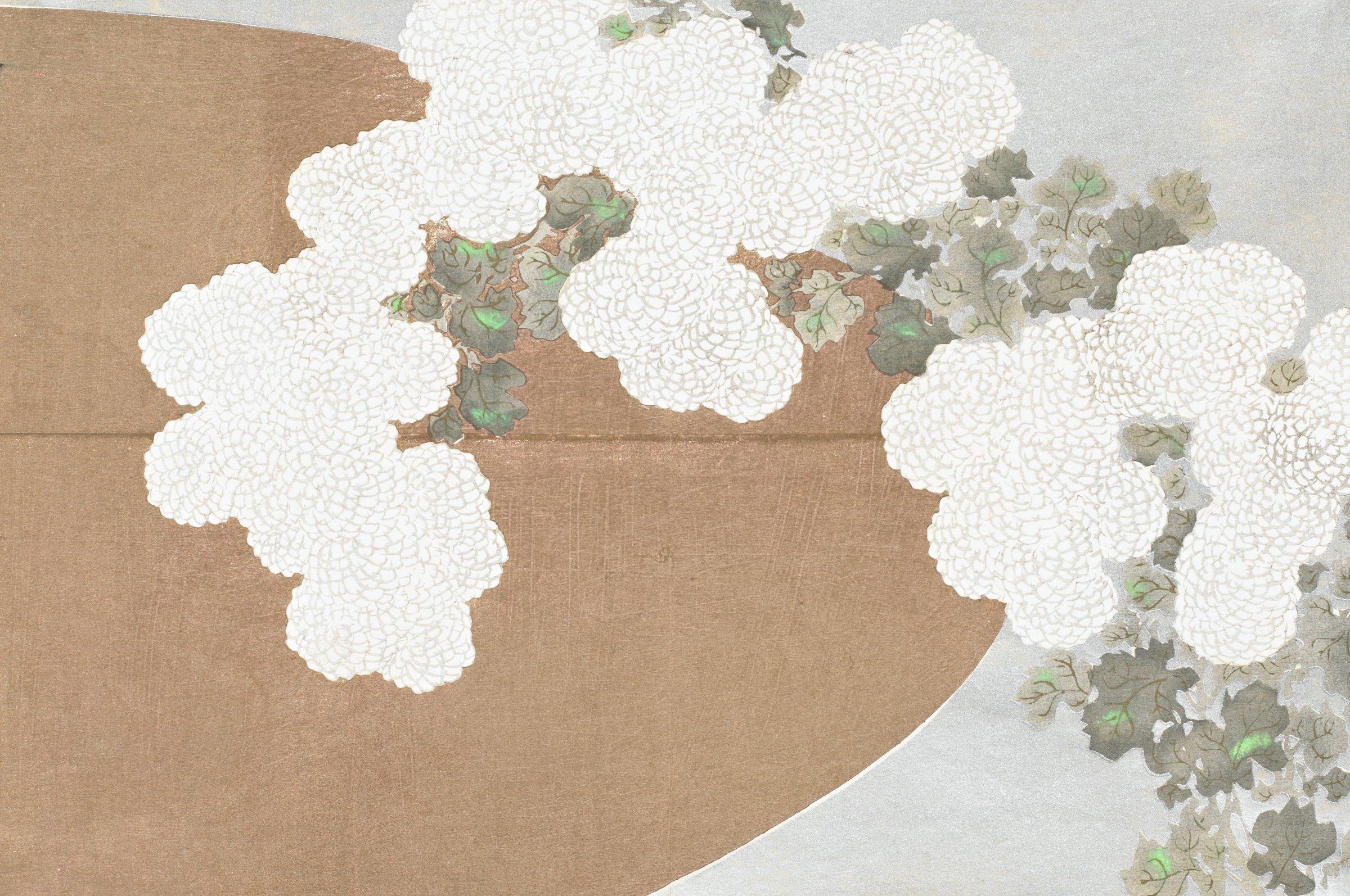 Kiku (Chrysanthemum), from Momoyogusa (A World of Things), Volume 1, Kamisaka Sekka, ink and color on paper