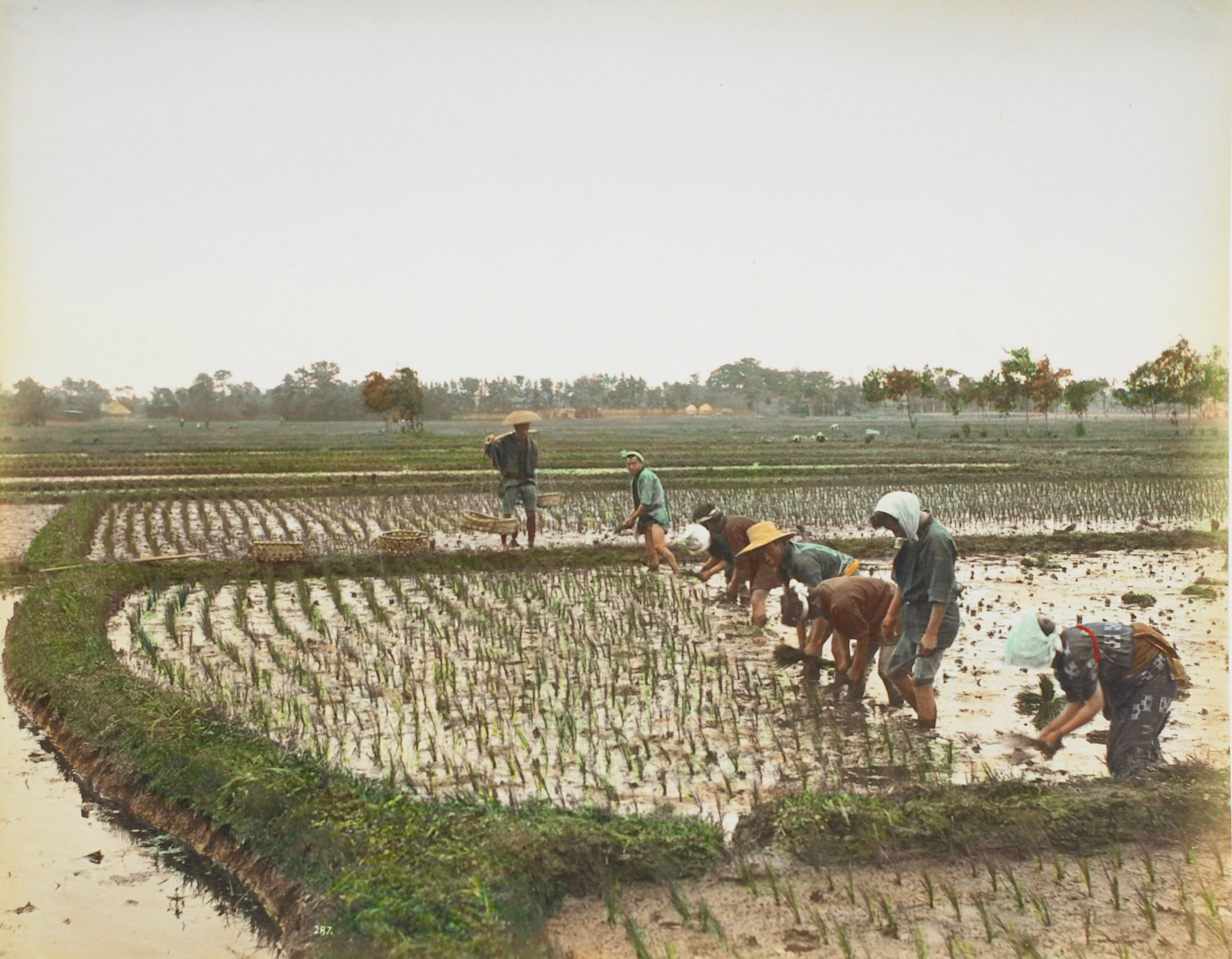 Orange Shop (.16, recto); Planting Rice (.17, verso), Attributed to Kusakabe Kimbei, hand-colored albumen prints mounted to album page