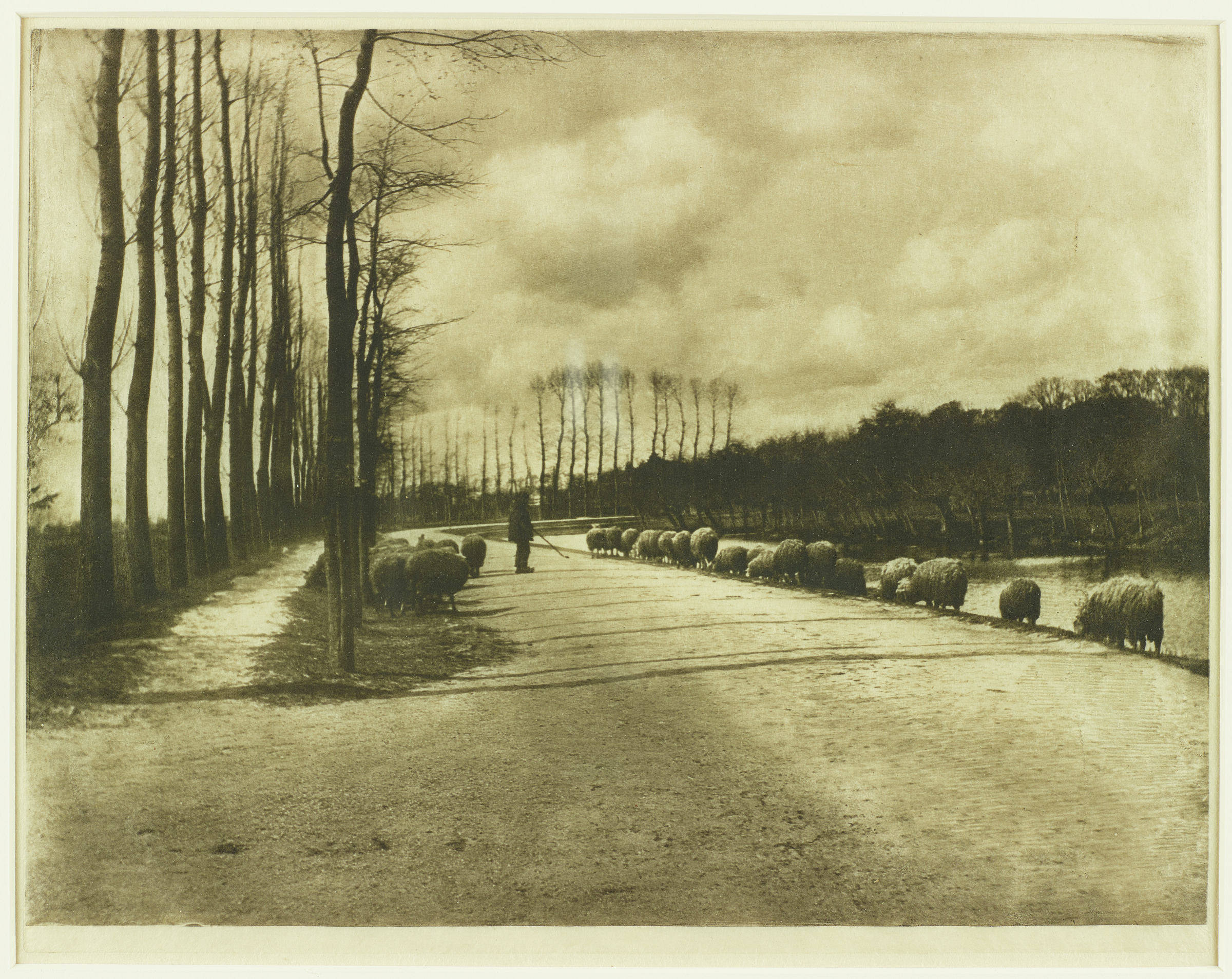 This black and white photograph represents sheep walking away from the viewer beside a river at the right of the image. A man on a road heards the sheep. There are more sheep to his left, walking alongside a stand of trees. The background is filled with trees of varying heights.