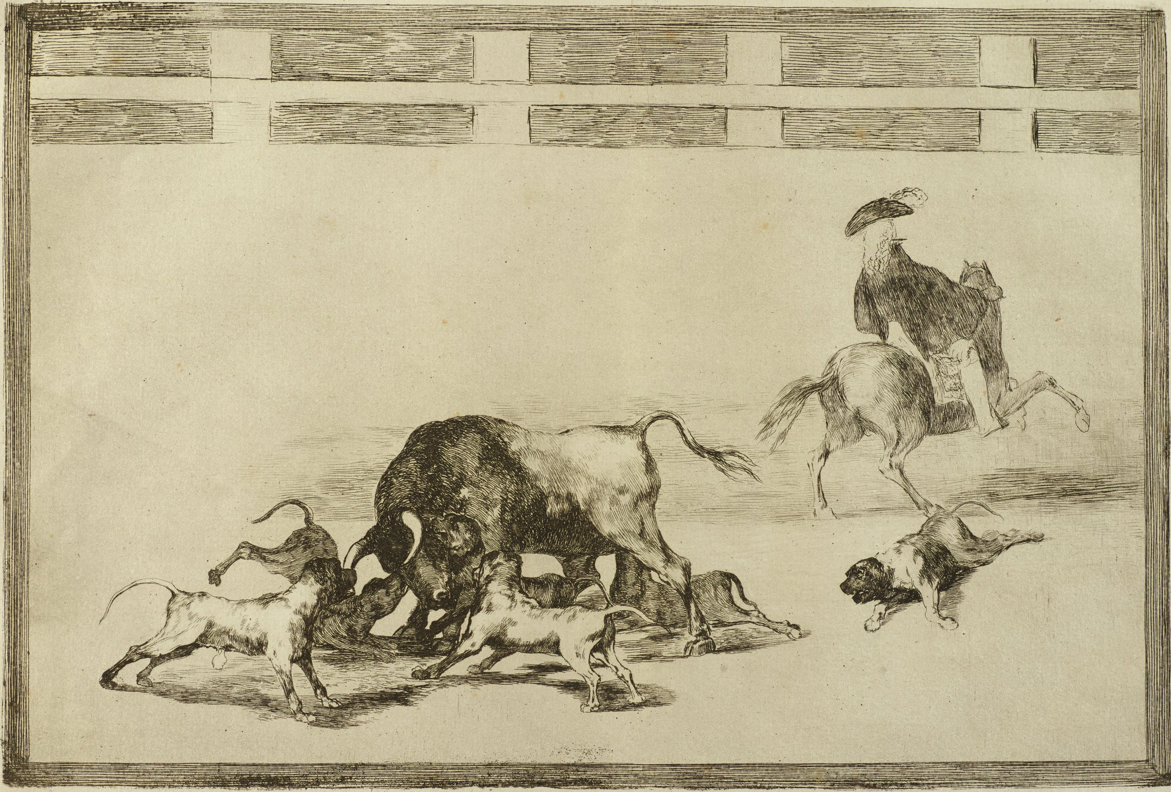A bull standing off-center is being surrounded and attacked by six dogs while a man on the right in a feathered hat rides away from the viewer on horseback.