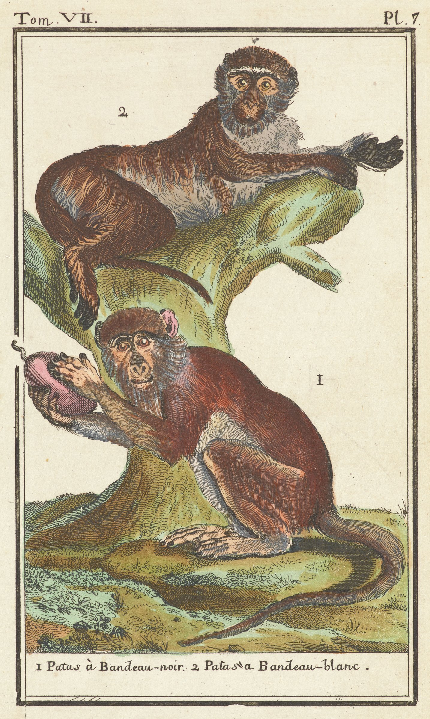 Two monkeys are depicted. One crouches on the ground holding a fruit. The other reclines on a broken tree.