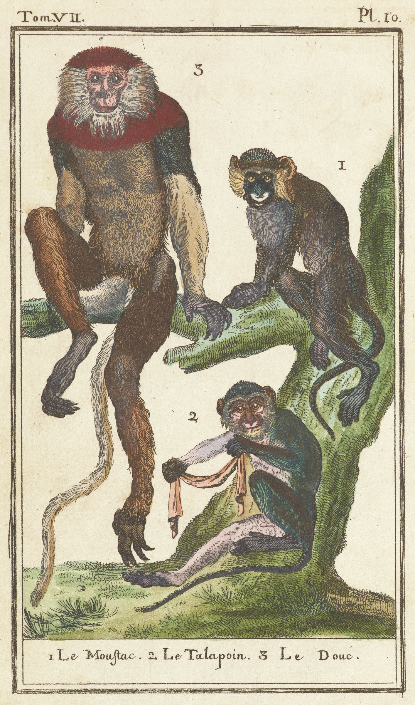 Three different types of monkeys sit on a tree limb and tree trunk facing the viewer.
