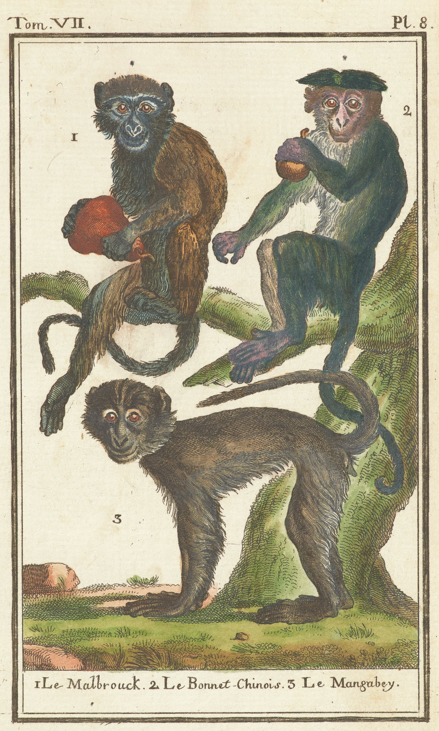 Three monkeys are depicted. Two monkeys sit on a tree limb holding fruit. A thrid monkey stands on all fours on the ground beneath them.