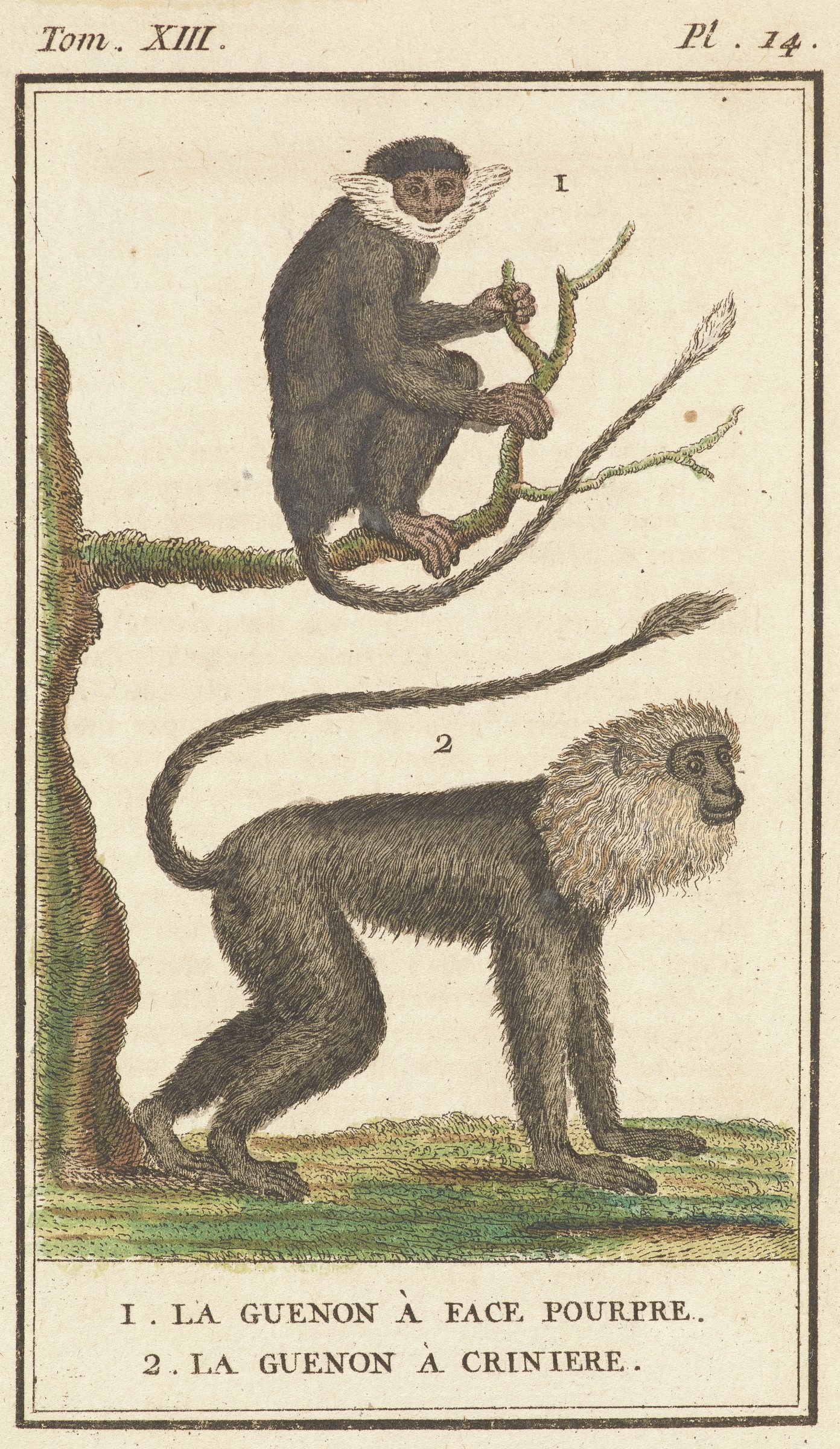 Two monkeys are depicted. One monkey sits on a tree limb facing the viewer. The second monkey stands on all fours on the ground.