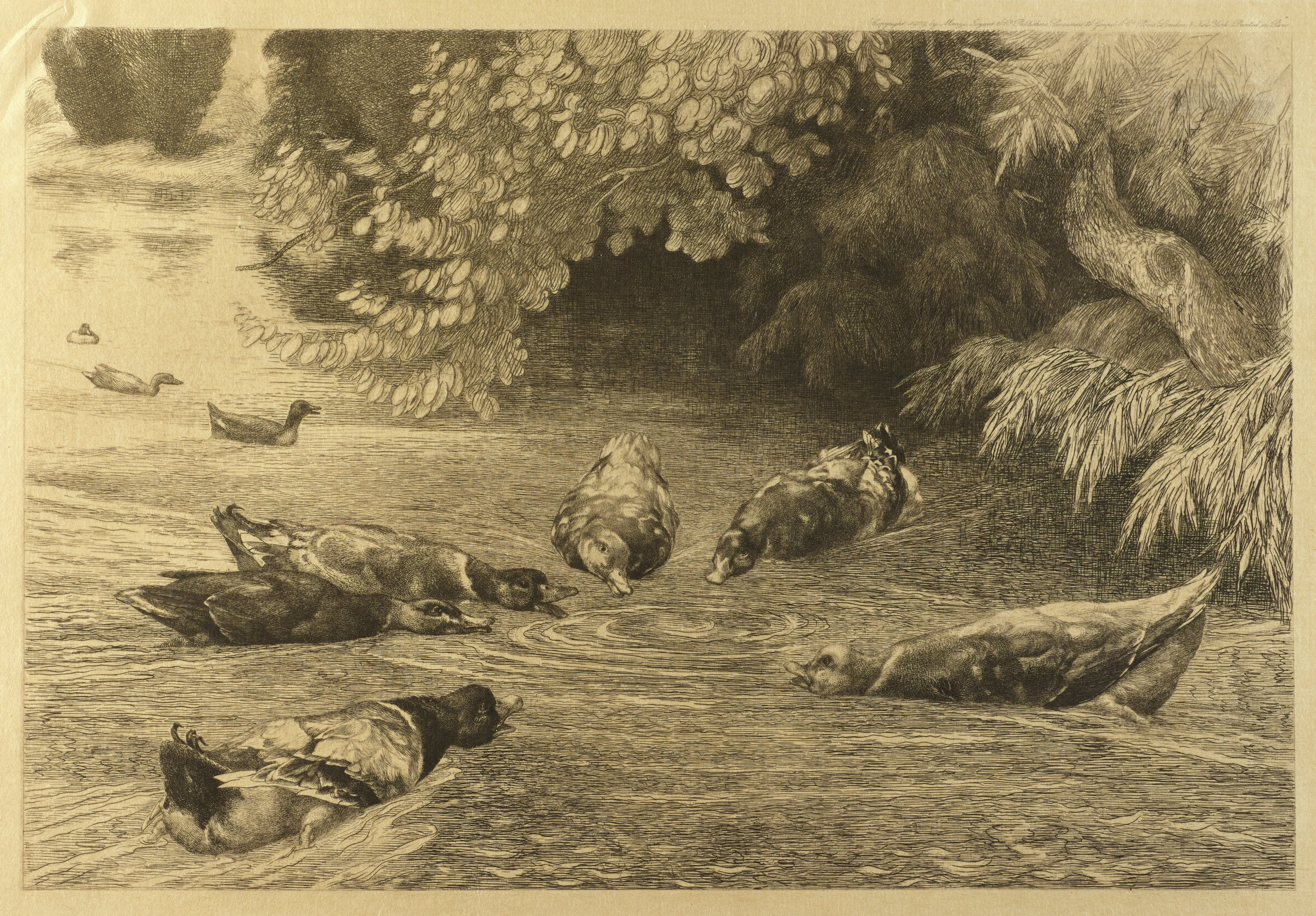 A group of ducks gather around a ripple in a body of water. Lush trees populate the bank.