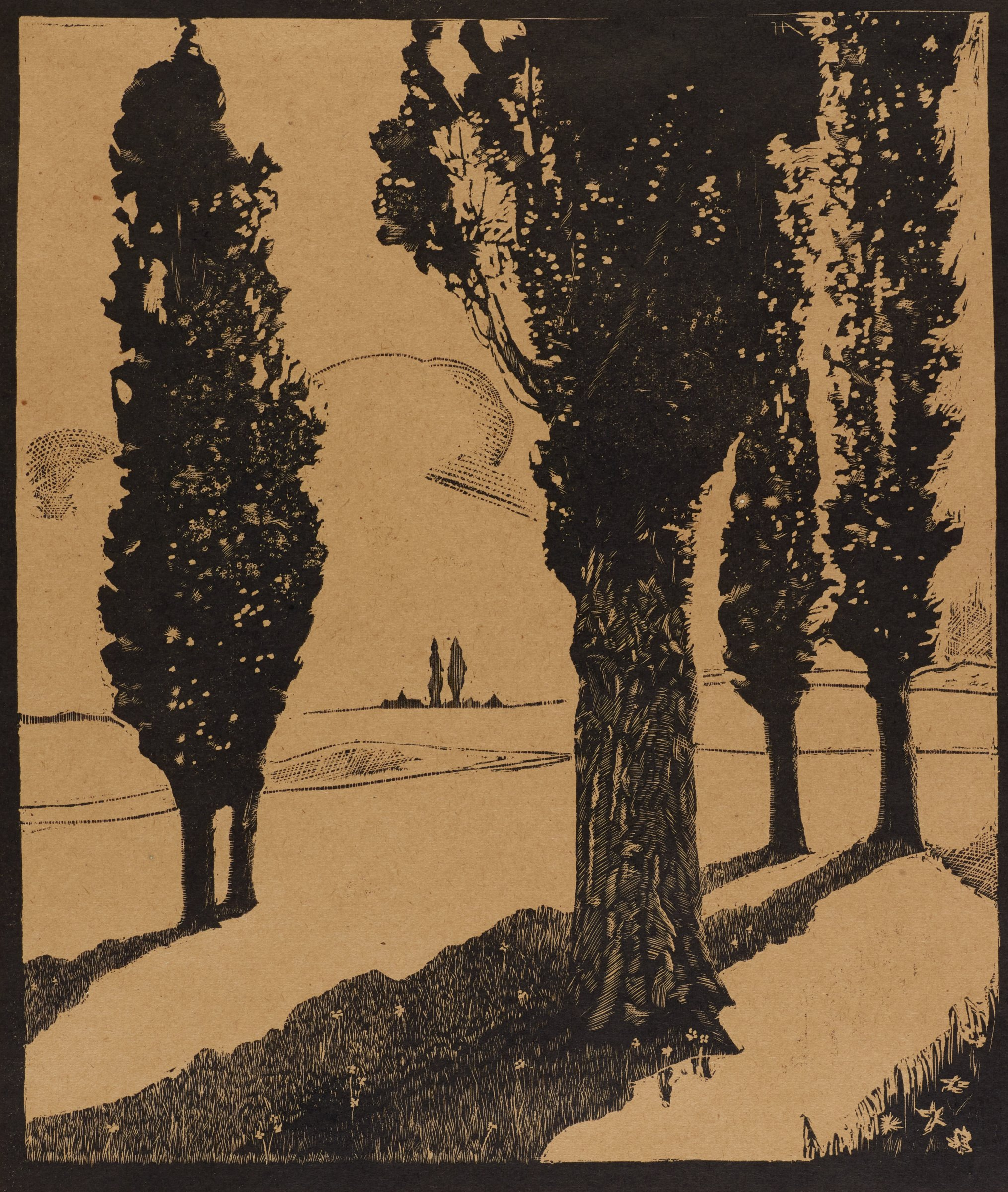 A stand of four trees, all of which cast long shadows; one tree in the foreground, the other three in the background.