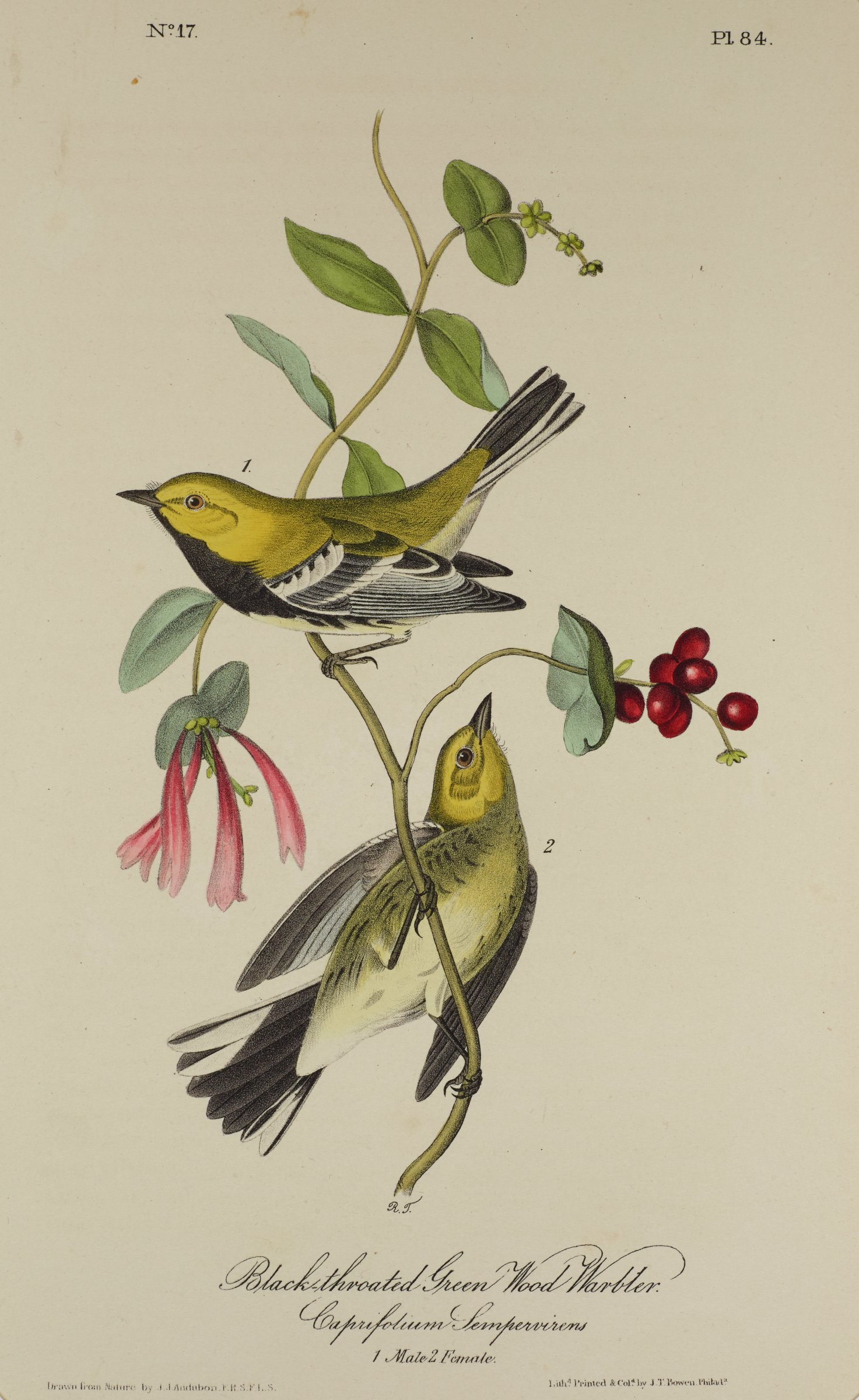 Two birds are depicted perched on a thin branch that blooms with a reddish-pink flower and small red berries.The birds are covered in yellow, black, and white feathers.